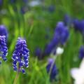 写真: ~秘密の花園、見つけました♪~