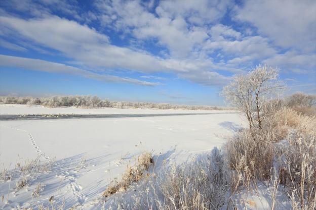 冬晴れの沼地