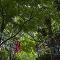 写真: 風鈴と階段と緑(05)