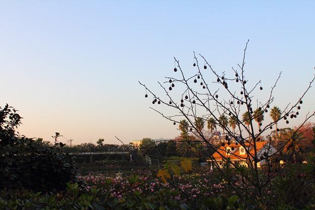 Photos: 谷津バラ園