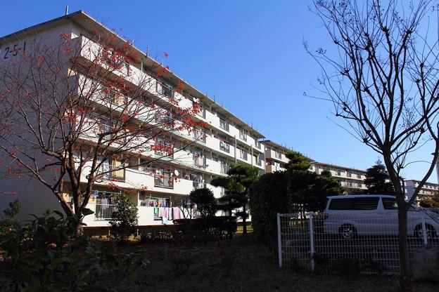 若松団地5
