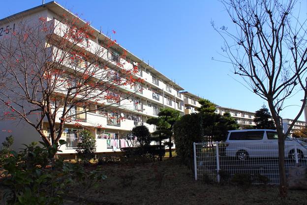 若松団地6