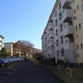 Photos: 若松団地9