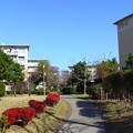 Photos: 若松団地15
