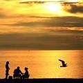 夕日と家族と鴎