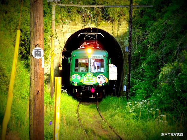 トンネルから出てきた青ガエル。ここも自然緑化軌道となっています。