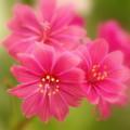 Photos: 春よ来い~♪
