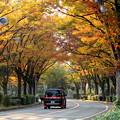 秋色に染まる街
