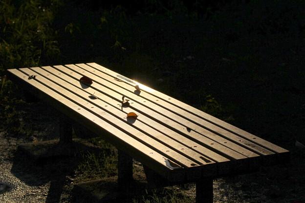 Photos: 雨上がりのベンチ