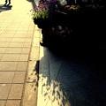 ラベンダーの咲く街角