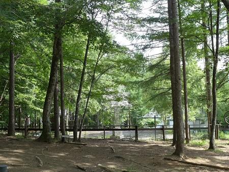 (10)森のドッグラン