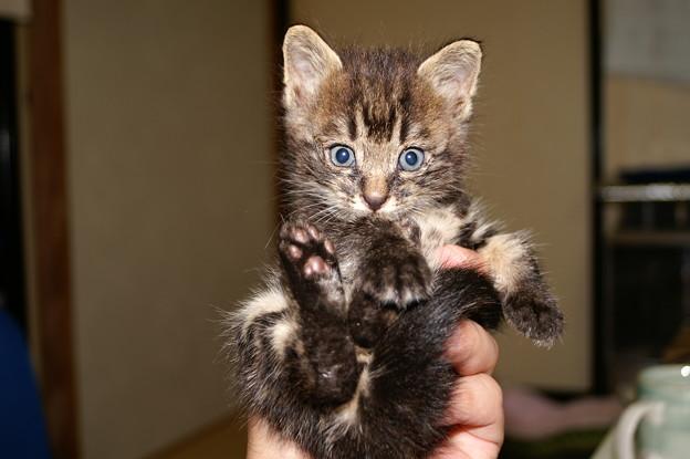 掌に乗るほど小さな子猫