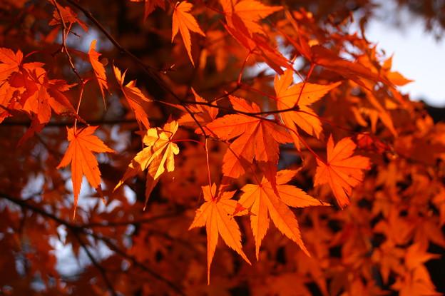鶴ヶ城の紅葉、よってみた