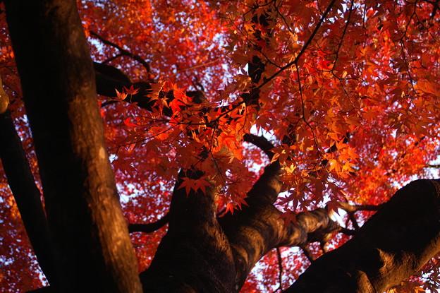 鶴ヶ城の紅葉