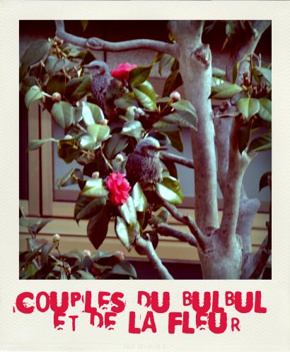 COUPLES du BULBUL et de la FLEUR