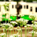 Photos: Tadami_1