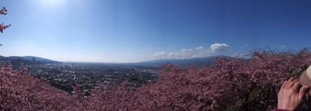 matuda_sakuramaturi_p06
