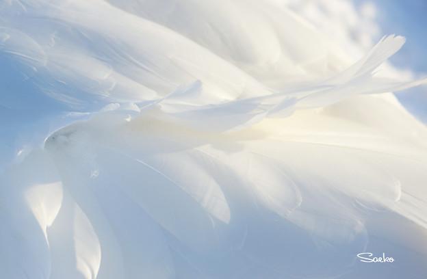 風になびく純白