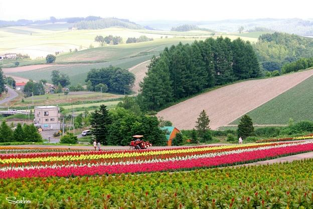 花畑からの眺望