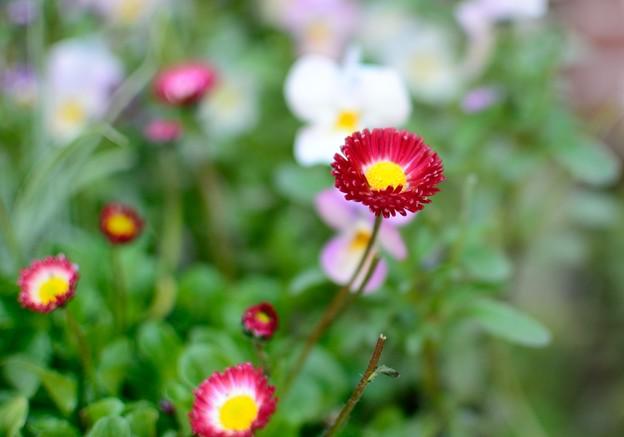 小さい花 3
