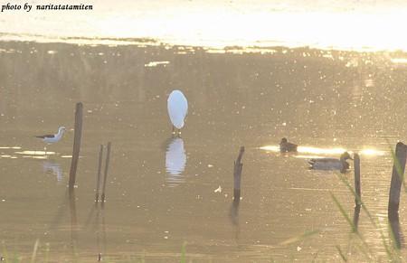 沼の朝01