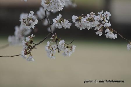 倉松公園06