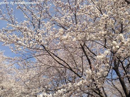 大宮花の丘公苑09