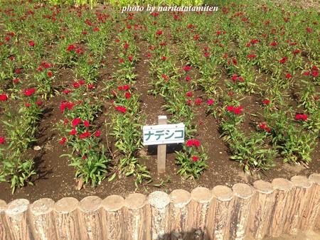 大宮花の丘公苑11