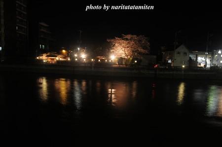 高橋屋さんの夜桜5