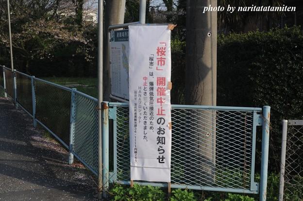 桜市が中止2