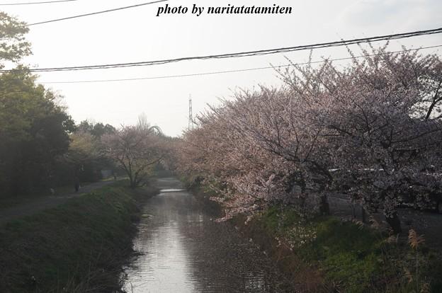 桜市が中止6