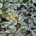 写真: 寒い01