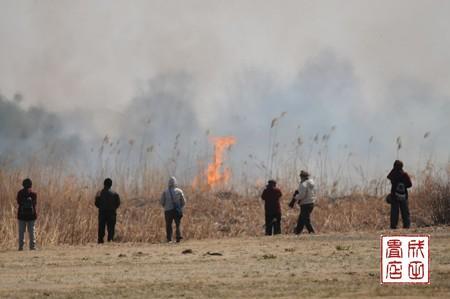 渡良瀬のヨシ焼き11