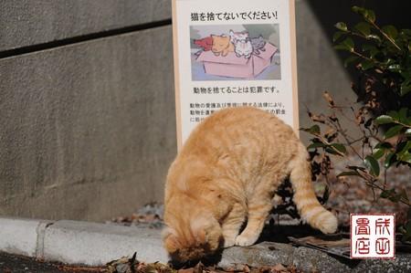 唐沢山の猫01