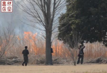渡良瀬のヨシ焼き18