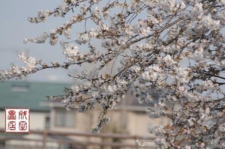 桜 宮代町09