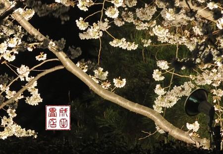 高橋家さんの桜10