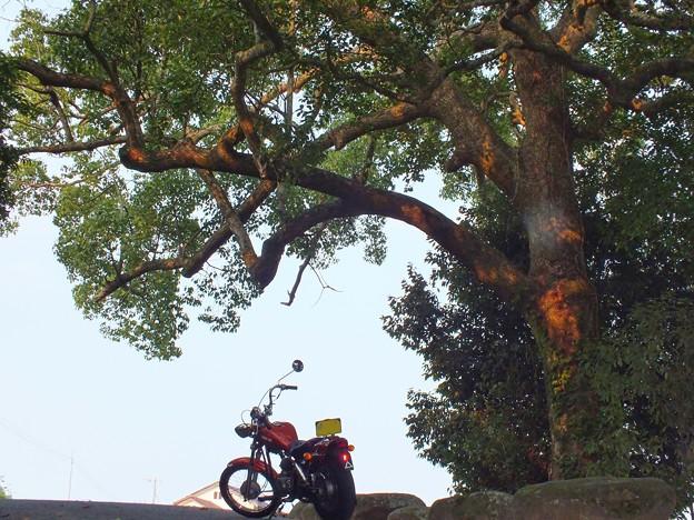 神聖な木の下で