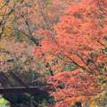 深耶馬渓の紅葉 057