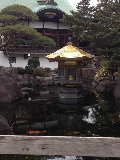 乗蓮寺 境内の池 金堂