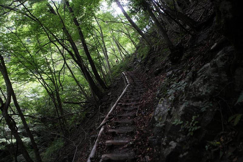 IMG_7293川苔山登山