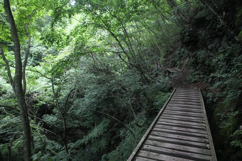 IMG_7295川苔山登山