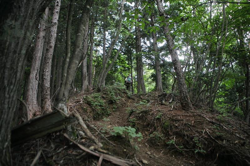 IMG_7351川苔山登山
