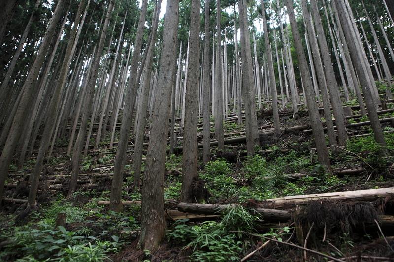 IMG_7378川苔山登山