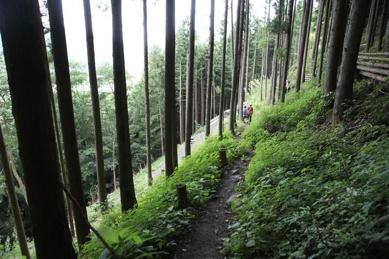 IMG_7382川苔山登山