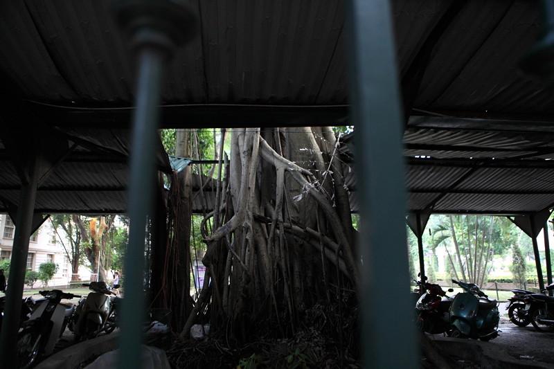 IMG_7543ベトナム旅行・ハノイにて