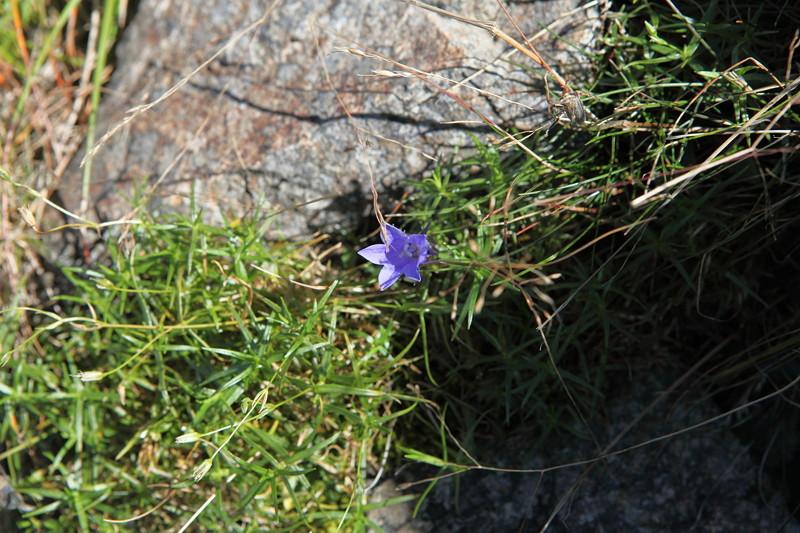 IMG_8998北アルプス西穂高岳登山