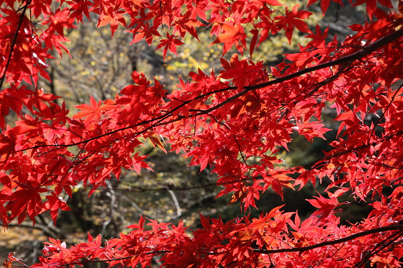 IMG_9349大山登山と紅葉