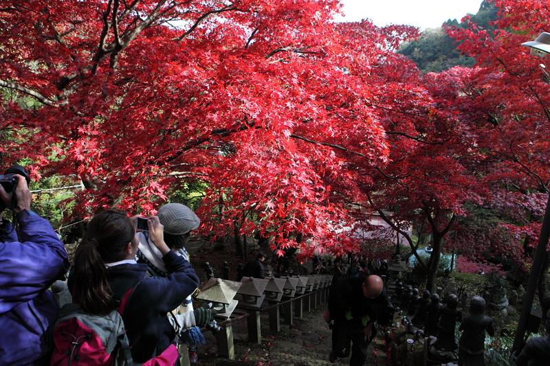 IMG_9367大山登山と紅葉