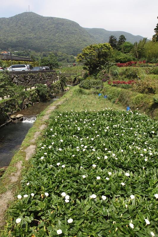 IMG_0306台湾陽明山_海芋祭と七星山登山